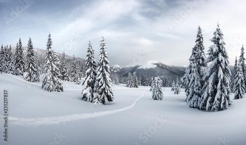 Leinwanddruck Bild Fantastic winter landscape with snowy trees. Carpathian mountains, Ukraine, Europe. Christmas holiday concept