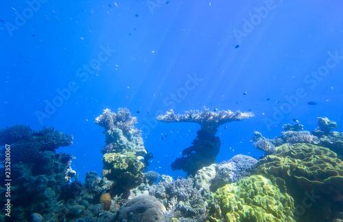 fototapeta na ścianę red sea underwater coral reef