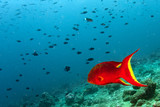 colorful grouper isolated on black © Andrea Izzotti