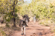 Südafrika Safari