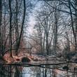 Winter forest in Leibnitz, Austria