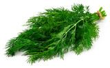 bunch fresh green dill isolated on white background - 235316040