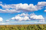 Nuages et ciel bleu au-dessus des vignes  © Unclesam