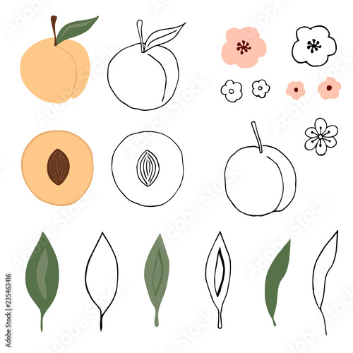 Set of hand drawn peaches, leaves and flowers. Vector isolated illustration. - 235463416