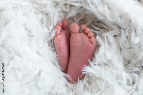 Leinwandbild Motiv feet of a newborn baby. baby's feet. baby feet on white background
