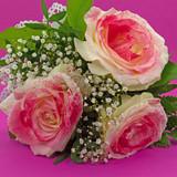 Blumengebinde aus Rosen vor violettem Hintergrund