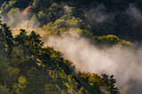 Morning mists and colorful autumn forest landscape in the mountains - 235496627