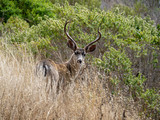 Young buck in the grass