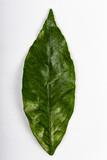 Foglia di verde su sfondo bianco