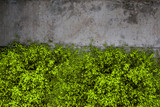 Concrete texture and green grass - 235572426