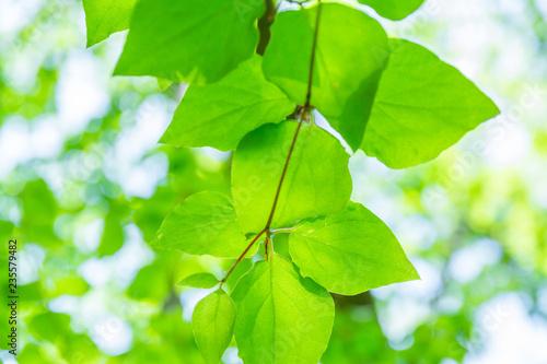 エコイメージ(Eco Image) - 235579482