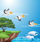 Fototapeta Pokój dzieciecy - Pelican flying on sky © blueringmedia