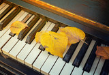 The old piano keys with fallen autumn yellow leaves - 235597492