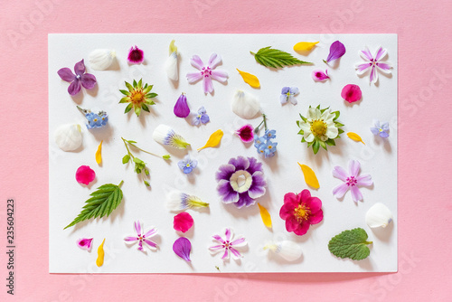 fototapeta na ścianę spring flowers and leaves