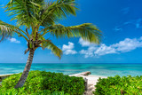Sunny tropical beach with palm tree, clear ocean water - 235607281