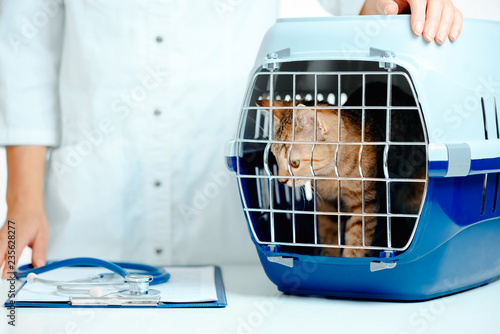 Kitten in carrier box on a visit to veterinarian. - 235628277