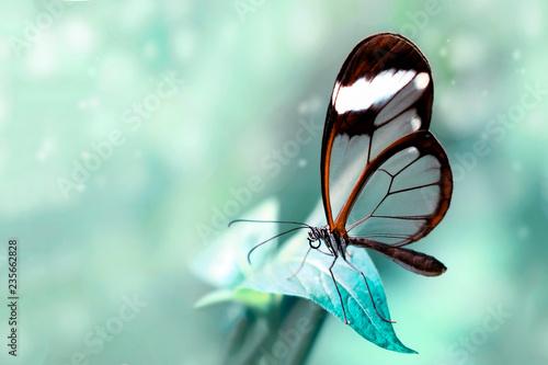 Beautiful butterfly sitting on flower in a summer garden - 235662828
