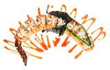 Fototapeta Maki - Hot fried sushi rolls in the shape of a dragon. Isolated on white background. Creative dish on the menu. © Sergei Dvornikov