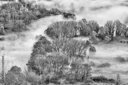 Nebbia sulla foresta, Italia - 235678060