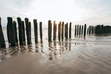Timber Piles at Dunkirke to protect the Beach / France