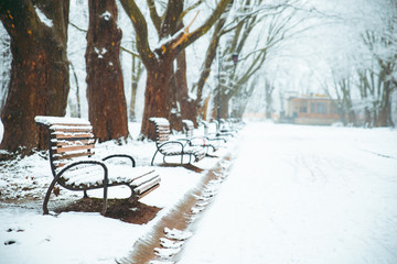 snowed city park. winter time. christmas season concept