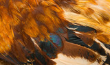 background of beautiful bird feathers