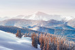 Quadro Fantastic winter landscape with snowy trees. Carpathian mountains, Ukraine, Europe. Christmas holiday concept