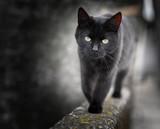 Black cat © Vesna