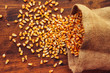 Leinwanddruck Bild - Harvested corn kernels spilling out of burlap sack
