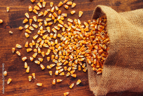 Leinwanddruck Bild Harvested corn kernels spilling out of burlap sack