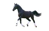 Running black horse isolated on white - 235755084