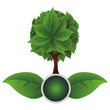 ecology leafs with tree plant icon