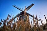 Dutch windmill behind the cornfield, in Benz on the island of Usedom. Germany - 235770649