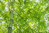 bamboo nature plant © Iarygin Andrii