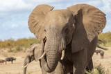 Elefant 26