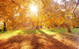 Beautiful, colorful autumn in an european country - 235784874