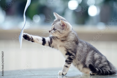 The striped  kitten plays with a tape. - 235792657