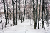 Wild forest after winter snowstorm - 235824080
