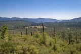 landscape after forest fire in Yosemite national park