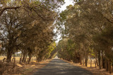 Road Landscape outback trees sun light Perth - 235876607