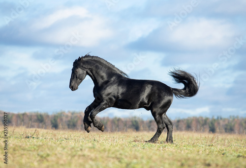 horse in field © Tani