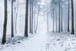 Leinwandbild Motiv Verschneiter Wald im Winter