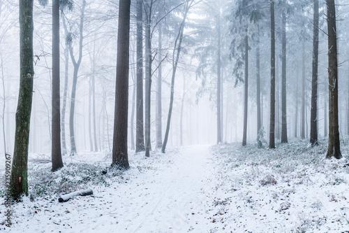 Leinwanddruck Bild Verschneiter Wald im Winter