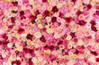 Many various pink, red and white flowers abstract pattern backgrounds - 235920409