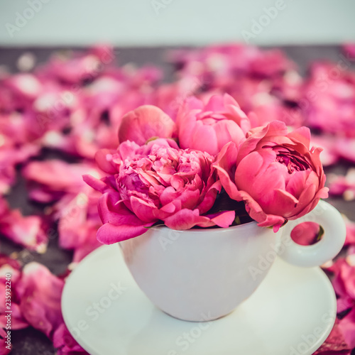 Close up light pink peony flowers bouquet in a decorative cup and saucer on dark background with peonies petals. Love gift greeting compliment concept. Soft selective focus. Square card. Copy space. - 235932240
