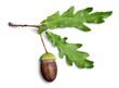 Leinwandbild Motiv Acorn and Oak Leaf