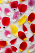 Colorful petals of tulips on white wooden surface, overhead view. Close-up.