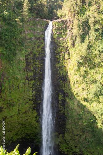 Hawaii - 236004204