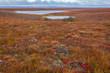 Fall splendor of the Canadian tundra