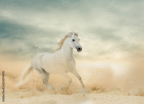 Beautiful white stallion